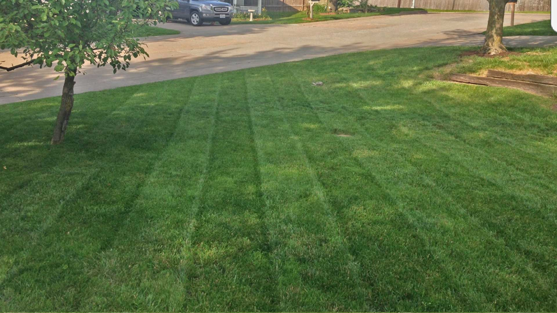 Close up of a lawn recently mowed by McVey Mowing in Columbia.