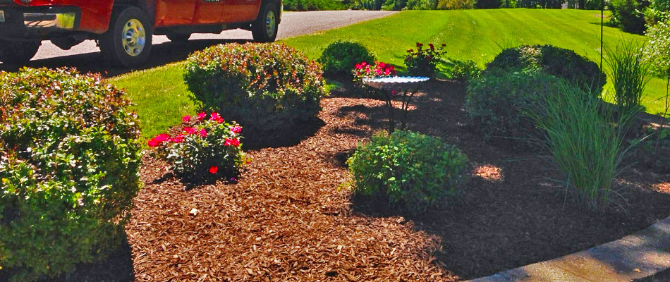 Round trimmed shrubs in landscaping bed at Columbia home.