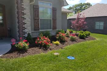 New landscaping bed with fresh laid mulch and perfectly trimmed shrubs in Columbia .