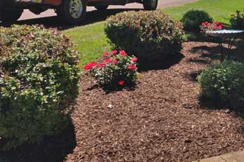 Trimming and pruning in a landscaping bed completed by McVey Mowing in Columbia.